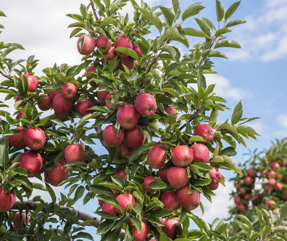 Hudson Valley Orchard